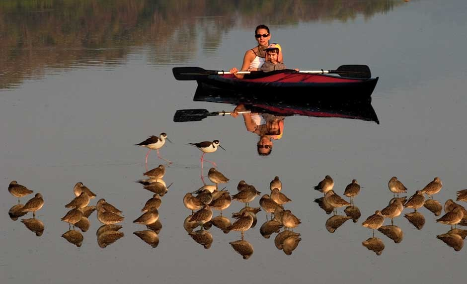 kayakers watch birds in mexico